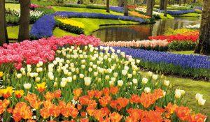 blomster i Holland og Belgien